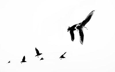 Birds In Backlight