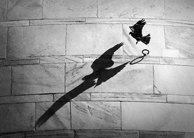 Eagle Casting A Shadow On The Taj Mahal