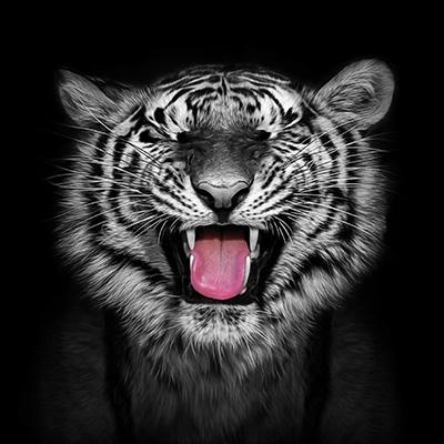 Laughing Tiger