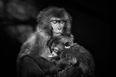 Monkey Mother And Child