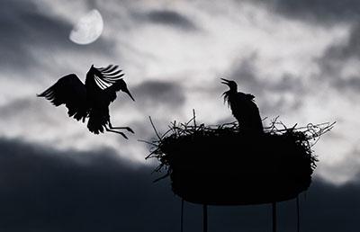 Stork (2)