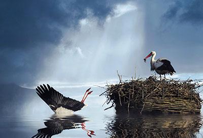 Stork (3)