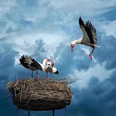 Stork (4)
