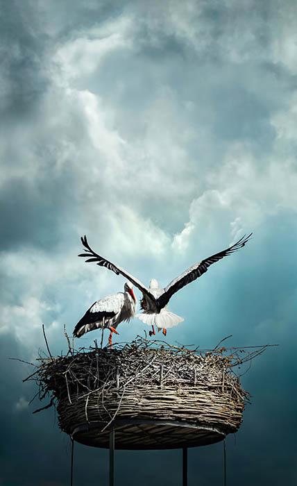Stork (5)