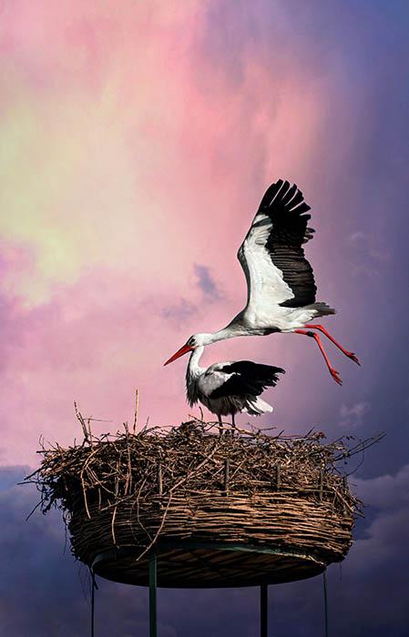 Stork (6)