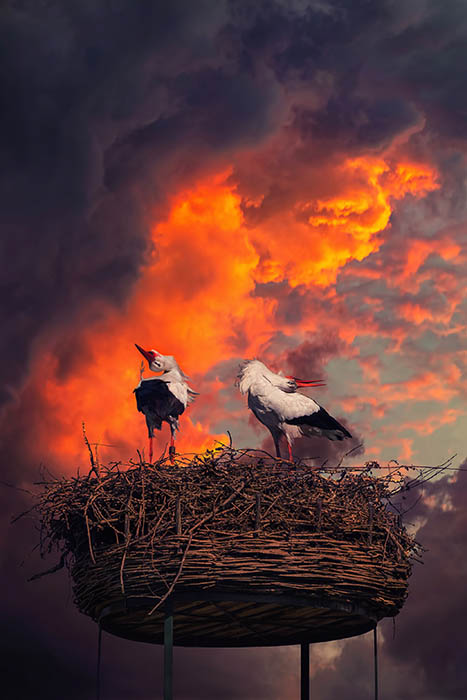 Stork (7)